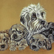 Dandie Dinmont Terriers Poster by Patricia Ivy