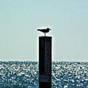 Dangerous Bird Perch Poster