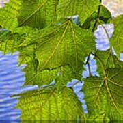 Dangling Leaves Poster by Deborah Benoit