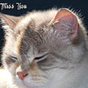 Daphne Cat Miss You Poster