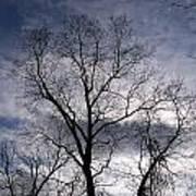 Dark And Stromy Night Trees Poster
