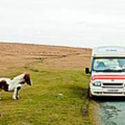Dartmoor Pony Fancies An Ice Cream Poster