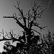 Dead Tree II Poster