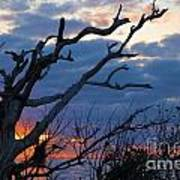Dead Trees At Sunrise Poster