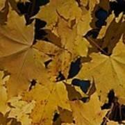 Deep Leaves Poster