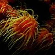 Deep Ocean Coral Polyp Poster
