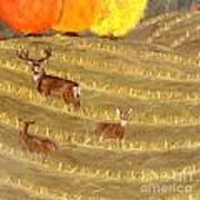 Deer In Field Poster
