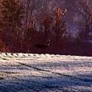 Deer In The Distance Poster