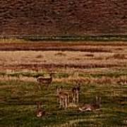 Deer In The Golden Meadow Poster