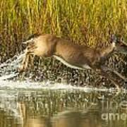 Deer Running Through The Salt Marsh Poster