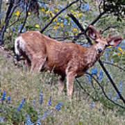 Deer Standing In Wildflowers Poster