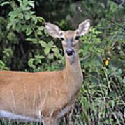 Deer Watch Poster