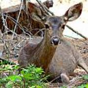 Deer Watching Poster