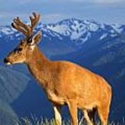 Deer With Antlers, Mountain Range In Poster