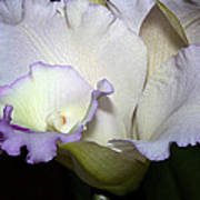 Delicate Purple Orchid Poster