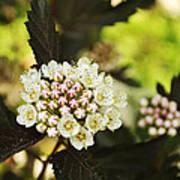 Delicate Spring Bloom Poster