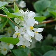 Delicate White Flower Poster
