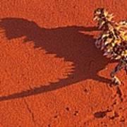 Desert Adapted Thorny Devil Australia Poster