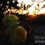 Desert Rose Reflections Poster