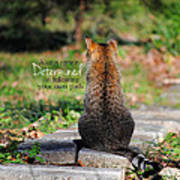 Determined Encouraging Cat Photo Poster