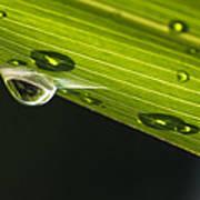 Dew On Leaf, Germany Poster