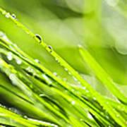 Dewy Green Grass  Poster
