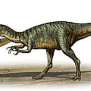 Dilophosaurus Wetherilli, A Prehistoric Poster