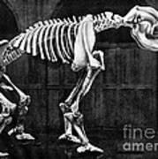 Diprotodon, Cenozoic Mammal Poster