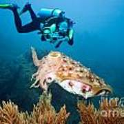 Diver And Cuttlefish Poster