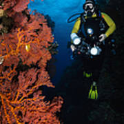 Diver And Sea Fans, Fiji Poster