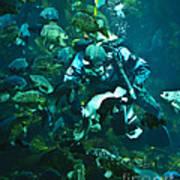 Diver Feeding Fish Poster