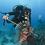 Diver Spears An Invasive Indo-pacific Poster