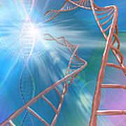 Dna Helices Poster