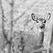 Doe A Deer. Poster