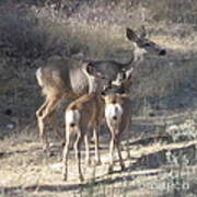 Doe And Twins Poster