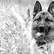Dog In Field Poster