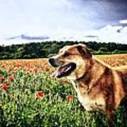 Dog In The Poppy Field Poster