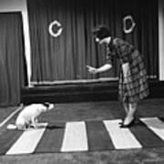 Dog On A Zebra Poster by John Drysdale