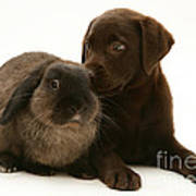 Dog Pup With Rabbit Poster by Jane Burton
