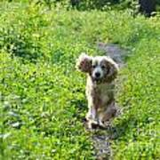 Dog Running In The Green Field Poster