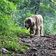 Dog Walking Poster