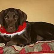 Dog With Christmas Collar Poster