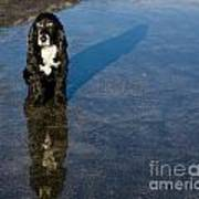 Dog With Reflections And Shadow Poster