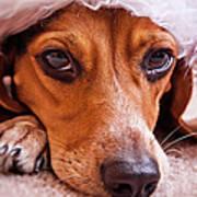 Dogs In Santa Hat Poster