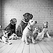 Dogs Watching At A Spot Poster