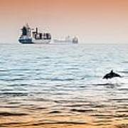 Dolphing Playing In The Sunset Poster