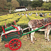 Donkey And Tea Gardens Poster