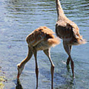 Sandhills Double Dipping Poster