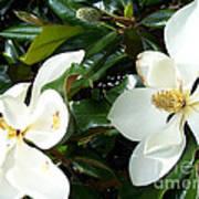 Double Magnolia Poster