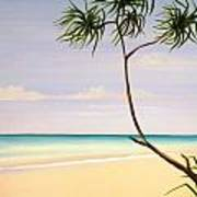 Doum Palm Poster